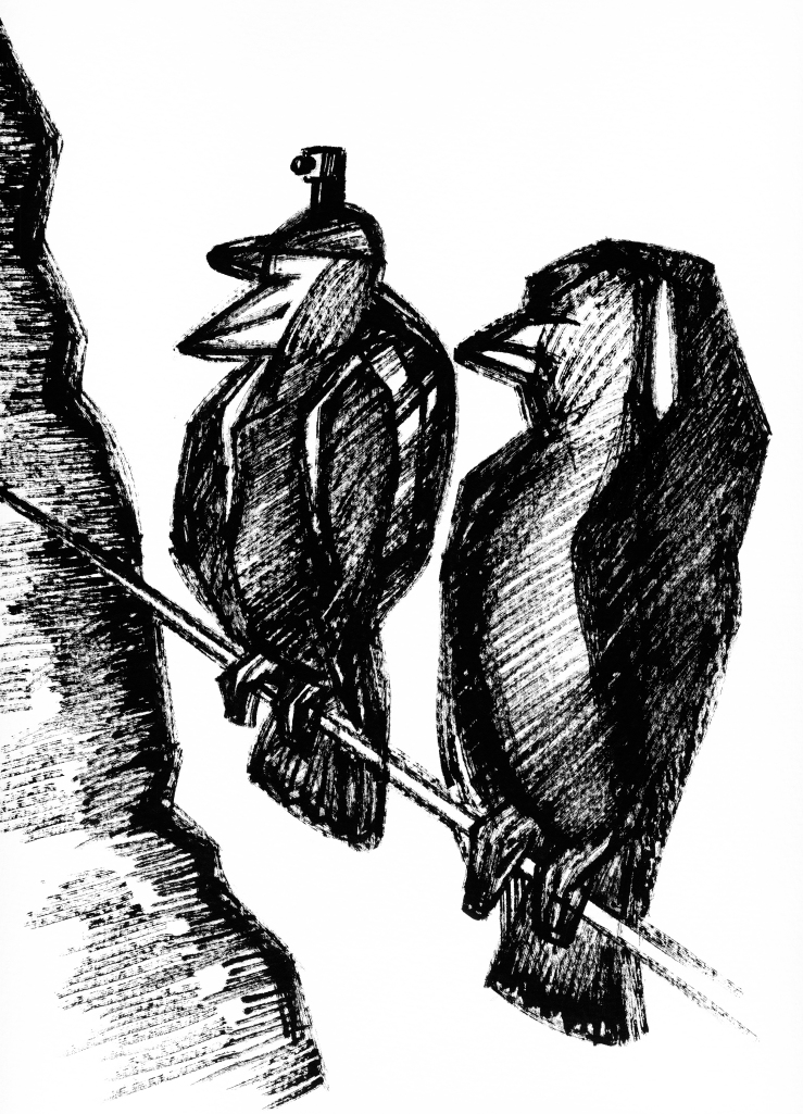 oiseaucaméra